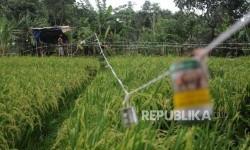 Pemkab Bekasi Distribusikan 173 Ton Benih Usai Panen