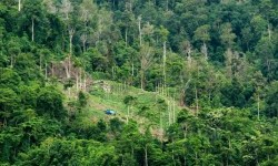 Cara Warga Senegal Cegah Hutan Tropis yang Terancam Musnah