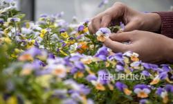 In Picture: Budidaya Edible Flower di Kota Bandung