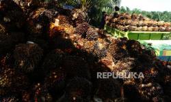 Perbaikan Tata Kelola Sawit Diminta Terus Dilanjutkan