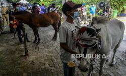 In Picture:  Pelatihan Perawatan dan Pemasangan Tapal Kuda di Ragunan