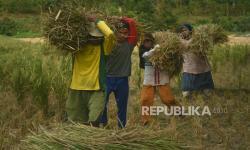 Pemprov Siapkan 37 Ribu Hektare Lahan Musim Tanam Ketiga
