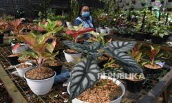 Penjualan Tanaman Hias Meningkat di Gorontalo