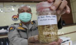 Resmi, Menteri KKP Larang Ekspor Benih Lobster