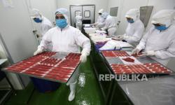 In Picture: Pengolahan Daging Ikan Tuna Ekspor di Banda Aceh