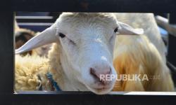 Alasan Mengapa Para Nabi Pernah Gembala Kambing?