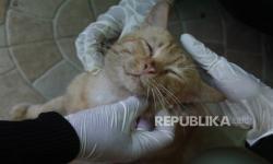 Pastikan Kesehatan Kucing Saat Memeliharanya