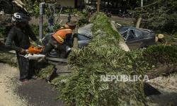 Pohon Tumbang di Bandung Menimpa Mobil & Ruko