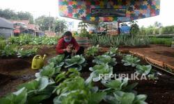 Warga RT 04 Cipinang Panen 80 Kg Hasil Pertanian Kota