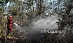 Apa Kabar Restorasi Lahan Gambut yang Terbakar di 2019?