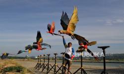 In Picture: Aktivitas Komunitas Free Fly Burung Macaw di Kendari