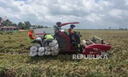 Jokowi Luncurkan <em>Food Estate</em> Kalteng Oktober Mendatang