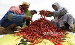 Sektor Pertanian Diyakini Tumbuh Positif di Kuartal II