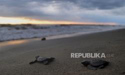 Gubernur NTB Lepas Penyu di Pesisir Pantai Selat Lombok