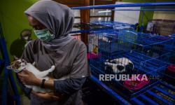 In Picture: Jasa Penitipan Hewan Menurun Drastis Imbas Larangan Mudik