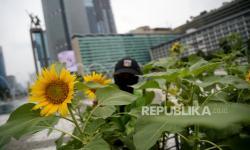 In Picture: Hamparan Bunga Matahari di Bundaran HI Sambut HUT DKI Ke-494