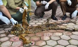 Penjual Kulit Harimau di Aceh Terancam 5 Tahun Bui