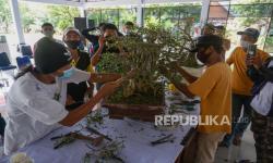 In Picture: Peragaan Pembuatan Tanaman Bonsai di Kabupaten Batang