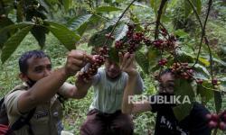 Gubernur Ingin Kakao-Kopi Jadi Komoditas Unggulan Sulteng