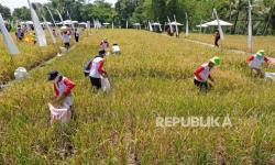 Sektor Pertanian di Magelang Jadi Andalan Gerakkan Ekonomi