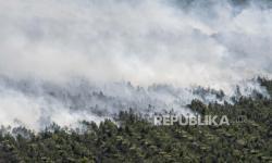 In Picture: Kebakaran Kebun Sawit di Ogan Komering Ilir Sumatera Selatan