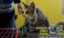 In Picture: Geliat Rumah Kucing Parung (2)