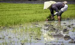 OJK dan Pemprov Sumsel Kembangkan KUR Pertanian