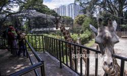 3.000 Orang Kunjungi Kebun Binatang Bandung