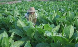 Sri Mulyani akan Naikkan Tarif Cukai Tembakau Tahun Depan