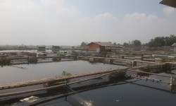 PLTA Saguling Sokong Beban Puncak Kelistrikan Jawa-Bali