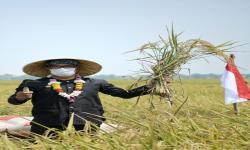 Ridwan Kamil Kembangkan Beras Bisa Panen 10 Ton Per Hektare