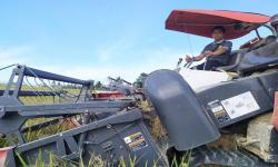 Sumpah Pemuda dan Sektor Pertanian