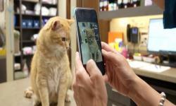 Aplikasi Pemantau Kesehatan Kucing Saat di Rumah Saja