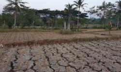 BPBD Gunung Kidul Antisipasi Potensi Bencana Kekeringan