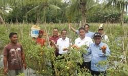 Mentan: Perlu Ekstensifikasi Pertanian di Pulau Seram
