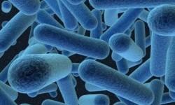 Ilmuwan Temukan Bukti Hubungan Bakteri Usus dan Autisme