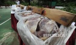 BKP Pangkalpinang Musnahkan 3,8 Ton Daging dari Australia