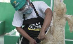 Baznas: Penyembelihan Hewan Kurban Dilakukan di RPH
