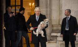 Kisah Dilyn, Anjing PM Inggris yang Suka Menempel di Kaki
