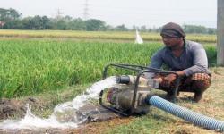 Pemerintah Perlu Tata Sistem Pertanian