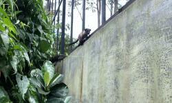 Republikopi Aceh 4: Melongok Kopi Luwak di Takengon