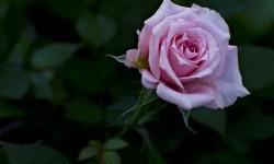 Penuhi Hidup dengan Rasa Syukur dan Lihat Keajaibannya