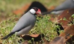 KSKP Bakauheni Selamatkan 6.075 Burung