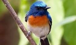 Karantina Pertanian Gagalkan Penyelundupan Ribuan Burung