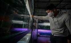 Penjualan Ikan Hias Alami Penurunan Saat PSSB