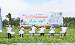 Produktivitas Melon dan Semangka Naik dengan Program Makmur