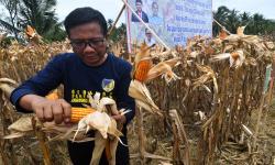 Dewan Jagung: RI Bakal Hadapi Krisis Berat Jagung