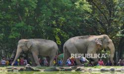 Taman Margasatwa Ragunan Dibuka Lewat Wisata Virtual