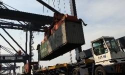 BUMN Klaster Pangan Ekspor Perdana Gurita ke AS