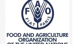Indonesia Wakili Asia sebagai Anggota Dewan FAO 2021-2024